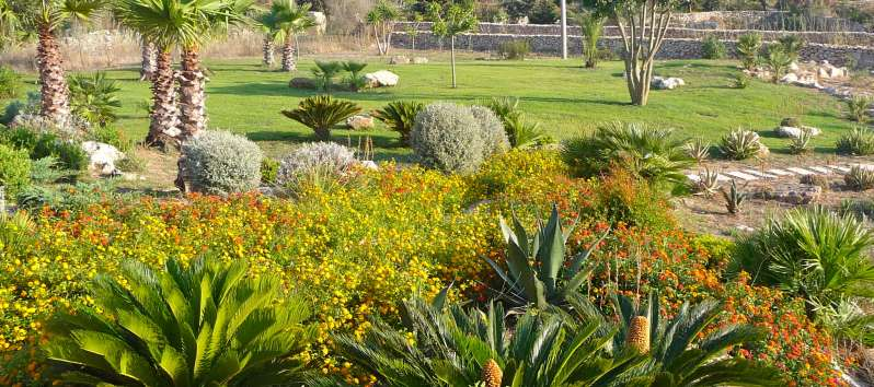 Villa Abir large rock garden with palm trees and Mediterranean vegetation